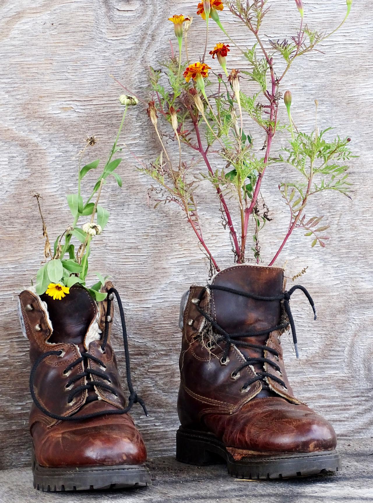 Shoe Close-up Creativity Creative Gardening Urban Nature Urban Gardening Flower Flowers,Plants & Garden Flower Collection EyeEm Gallery EyeEm Best Shots Tempelhofer Feld 2015