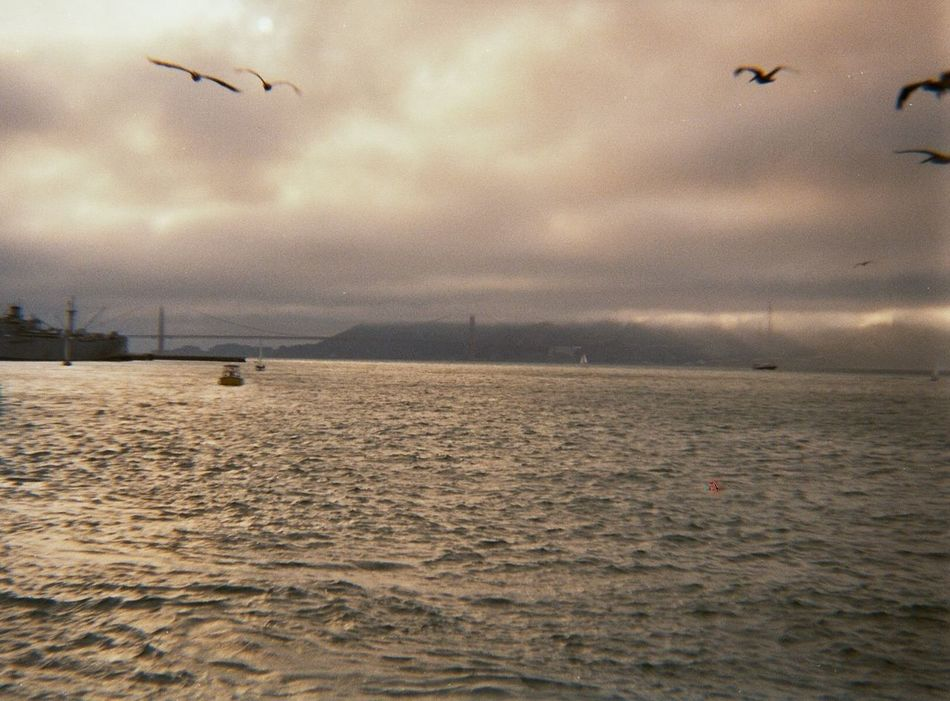 San Francisco SanFranciscoBay Golden Gate Bridge Alcatraz Fog Bird City Film Photography Filmisnotdead Ishootfilm