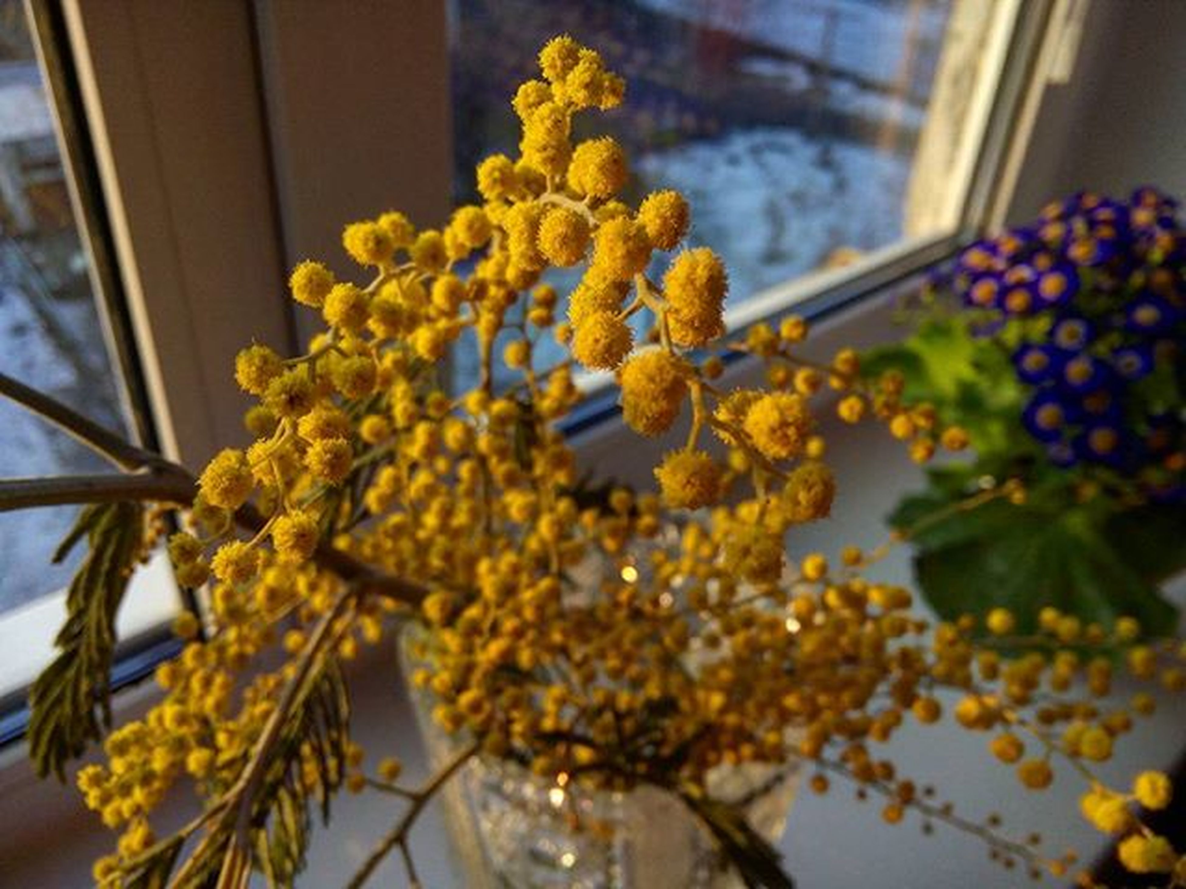flower, freshness, indoors, yellow, fragility, close-up, growth, low angle view, focus on foreground, petal, nature, beauty in nature, window, plant, hanging, selective focus, no people, decoration, day, branch