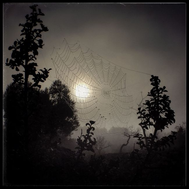 Dew drops on a spider's web, Catalonia, Spain. Beauty In Nature Close-up Nature Nature Plant Scenics Sky Spider Web Sun Tranquil Scene Tranquility Tree Vignette Weather Web