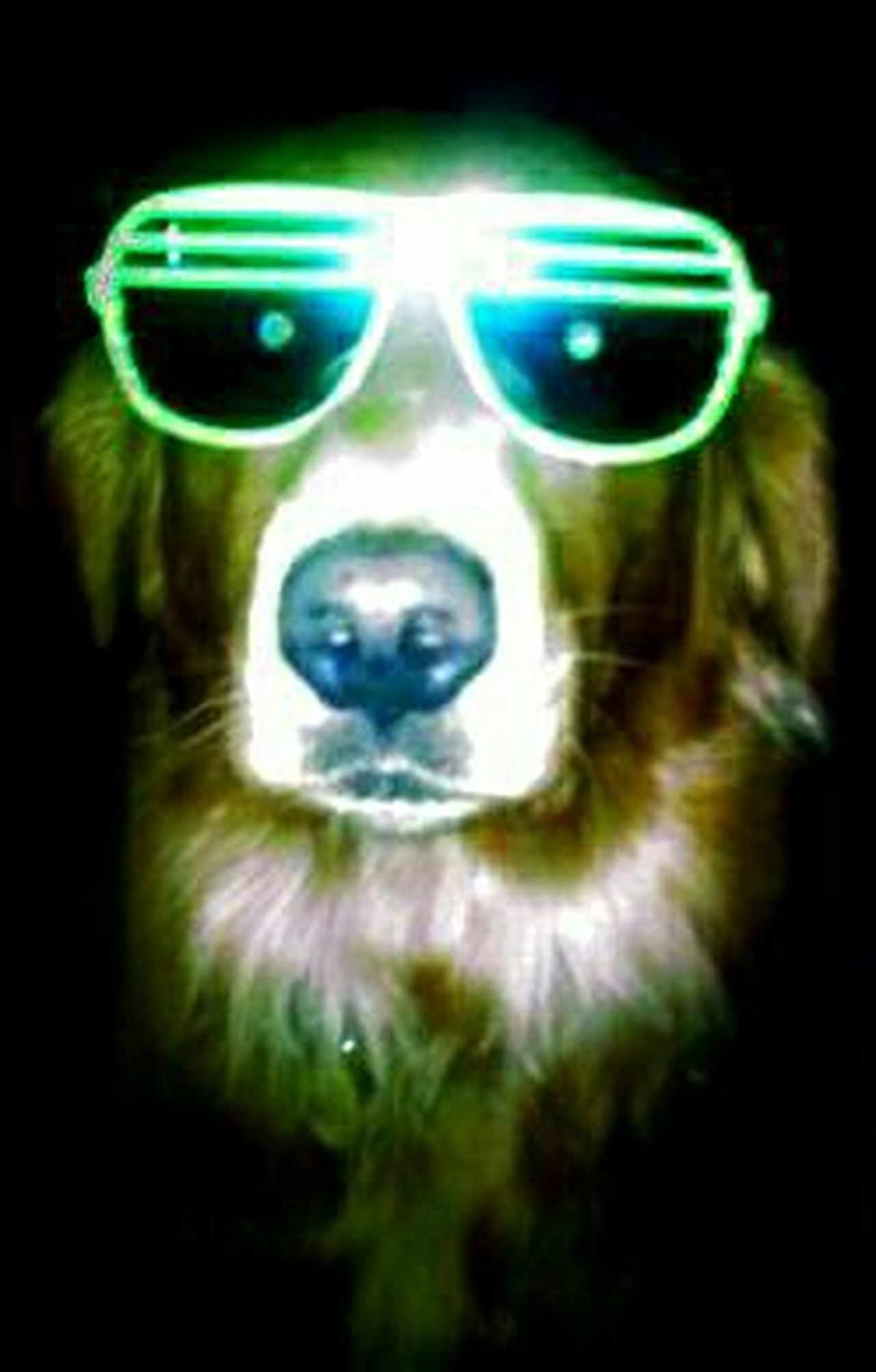 Summer Dogs I Love My Dog Too Cool For Edit His Names Slash Best Family Dog Ever