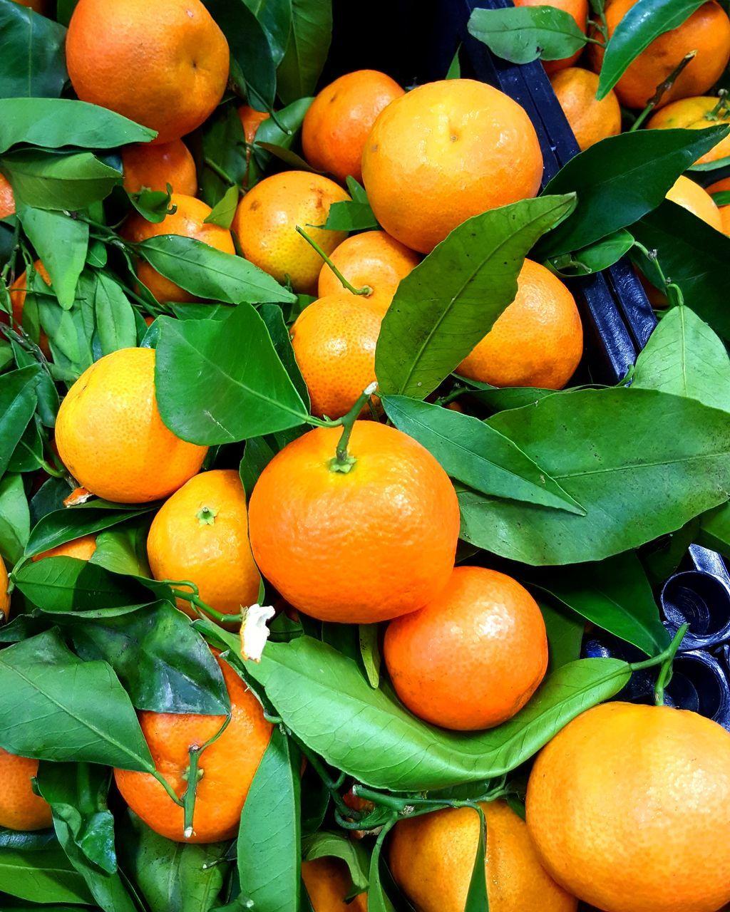 leaf, fruit, orange - fruit, orange color, freshness, food and drink, citrus fruit, green color, orange tree, healthy eating, food, day, growth, no people, outdoors, close-up, nature, tree