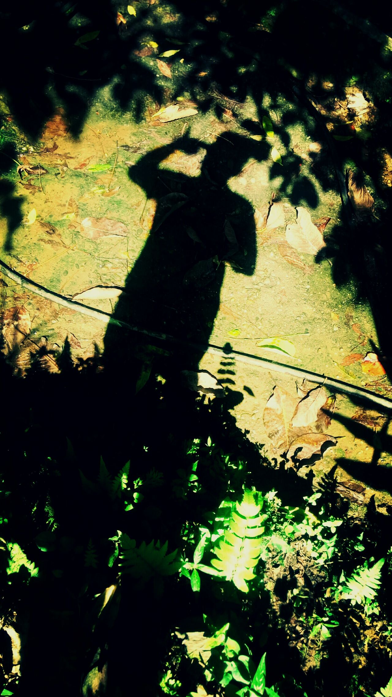 I..Am...NoT.....LivinG....i..am JusT...SurvivinG...... Sadness Photography Is My Escape From Reality! My Collection... Shadows & Lights That's Me! Reality Of Life Life's Simple Pleasures... Life Is A Journey Unknown Journey Loneliness Messed Up  Into The Woods