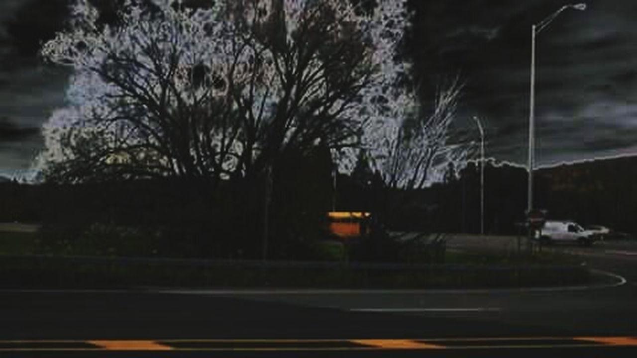 tree, no people, outdoors, night, road, illuminated, nature, architecture, sky