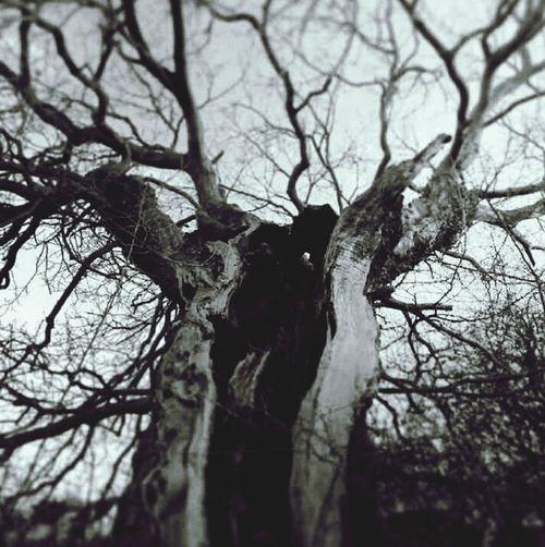Blackandwhite tree struck by lightning Taking Photos