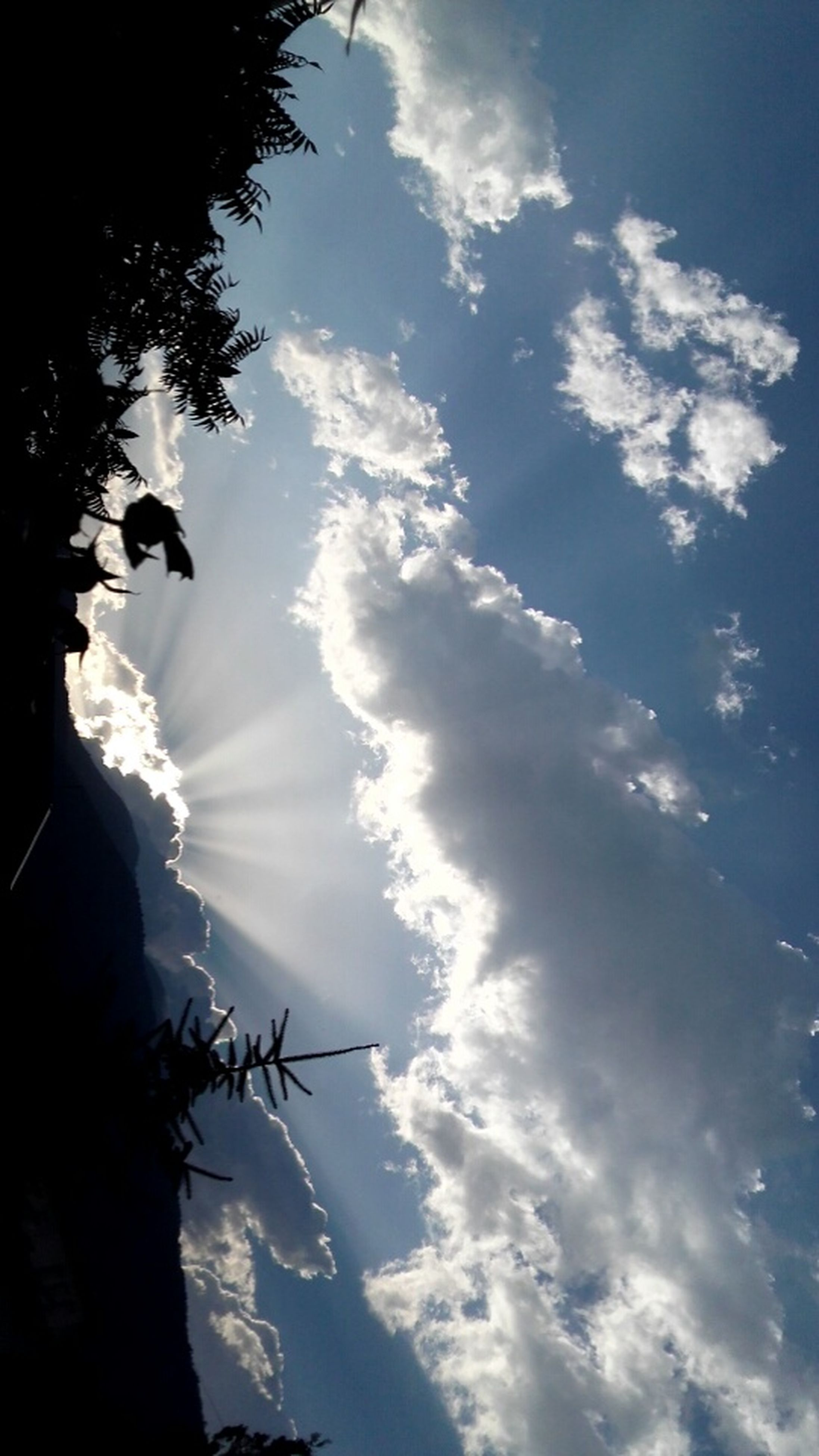low angle view, sky, day, cloud - sky, sunlight, nature, silhouette, animal themes, outdoors, no people, beauty in nature, tree, flying