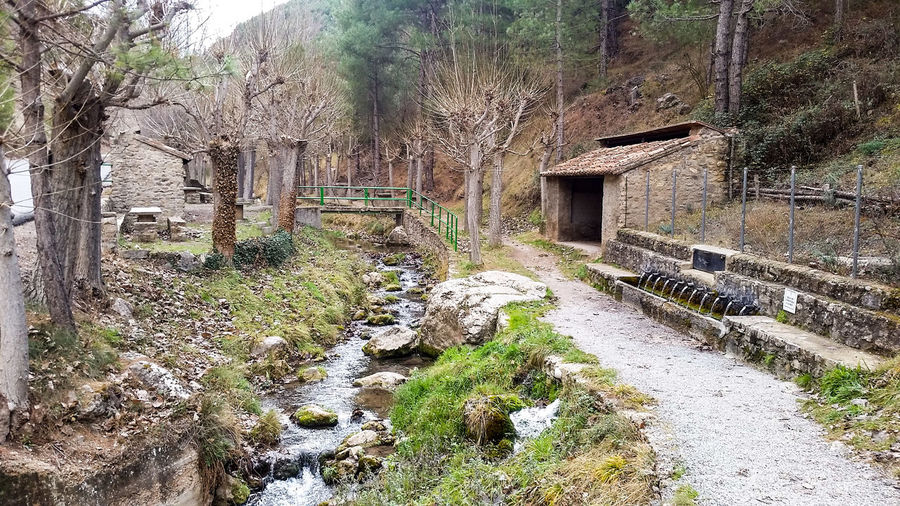 fuente del cabrito Trees Pines Stone Stone Building Countryside Mountain Mountain Range Fountain Natural Fountain Day Outdoors No People Nature Built Structure Architecture