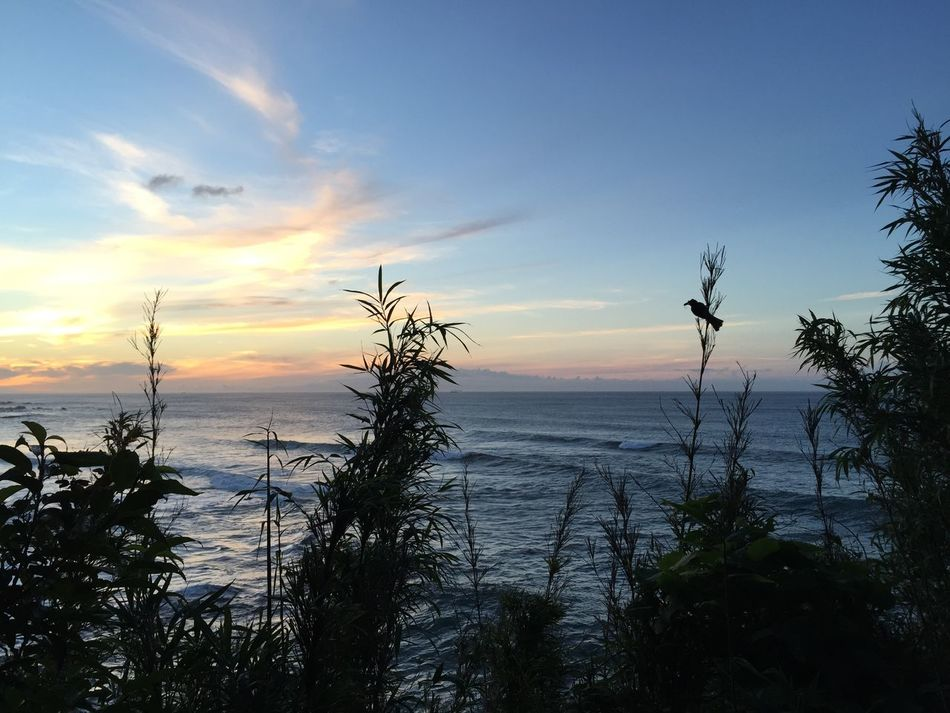 Nature On Your Doorstep Sunshine Sunrise Good Morning Sea And Sky Bird
