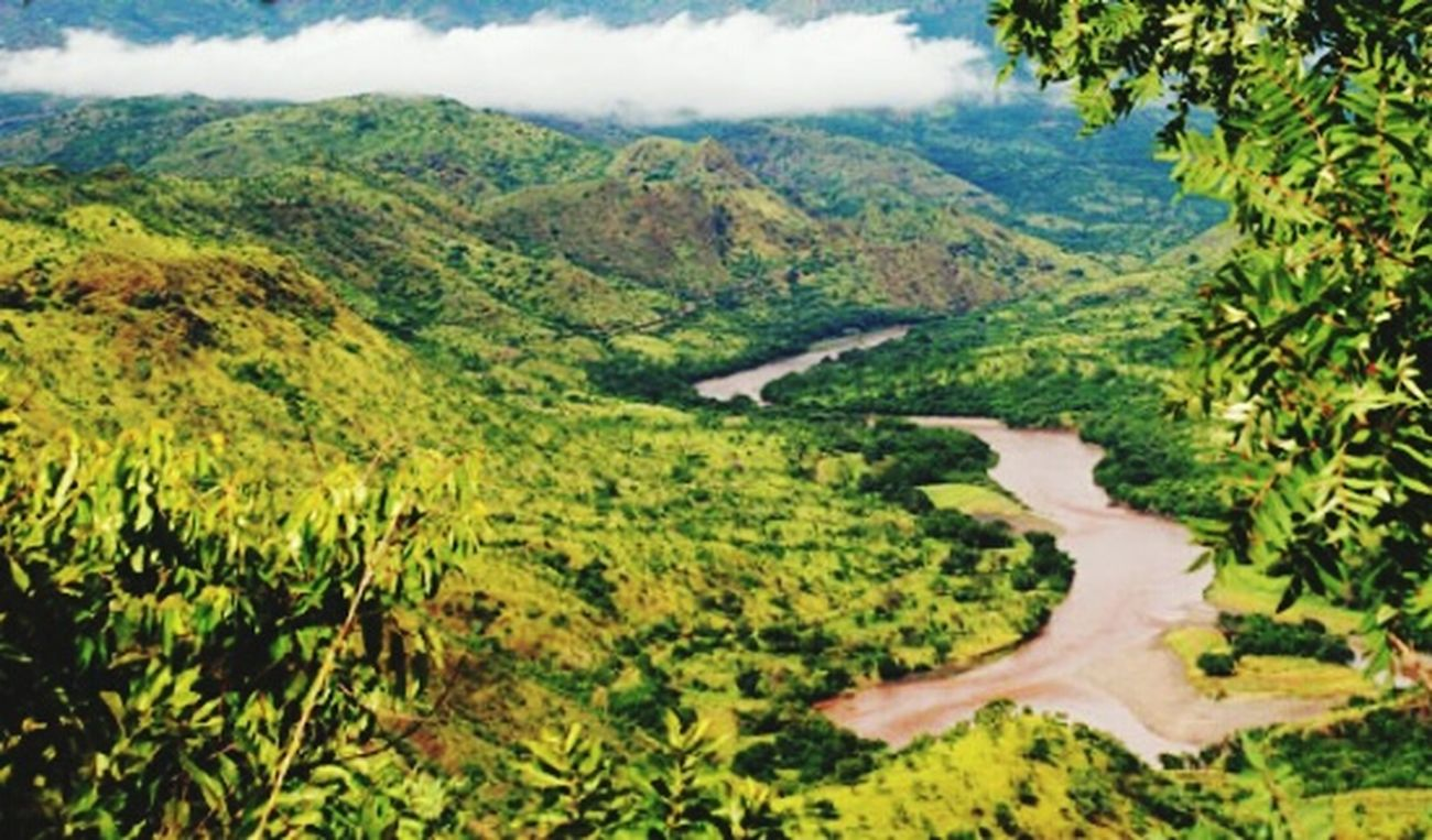 Taking Photos Hello World Landscape EyeEm Gallery Beautiful Nature Huggingatree  EyeEm Best Shots - Nature Trees Nature Hanging Out
