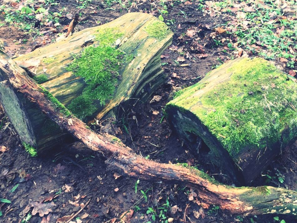 Abschied... Nature No People Tree Tree Stump Wood - Material Outdoors Day Forest Nature Tree