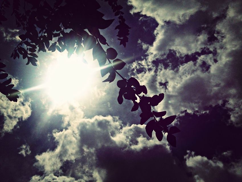 Sun_collection Taking Photos