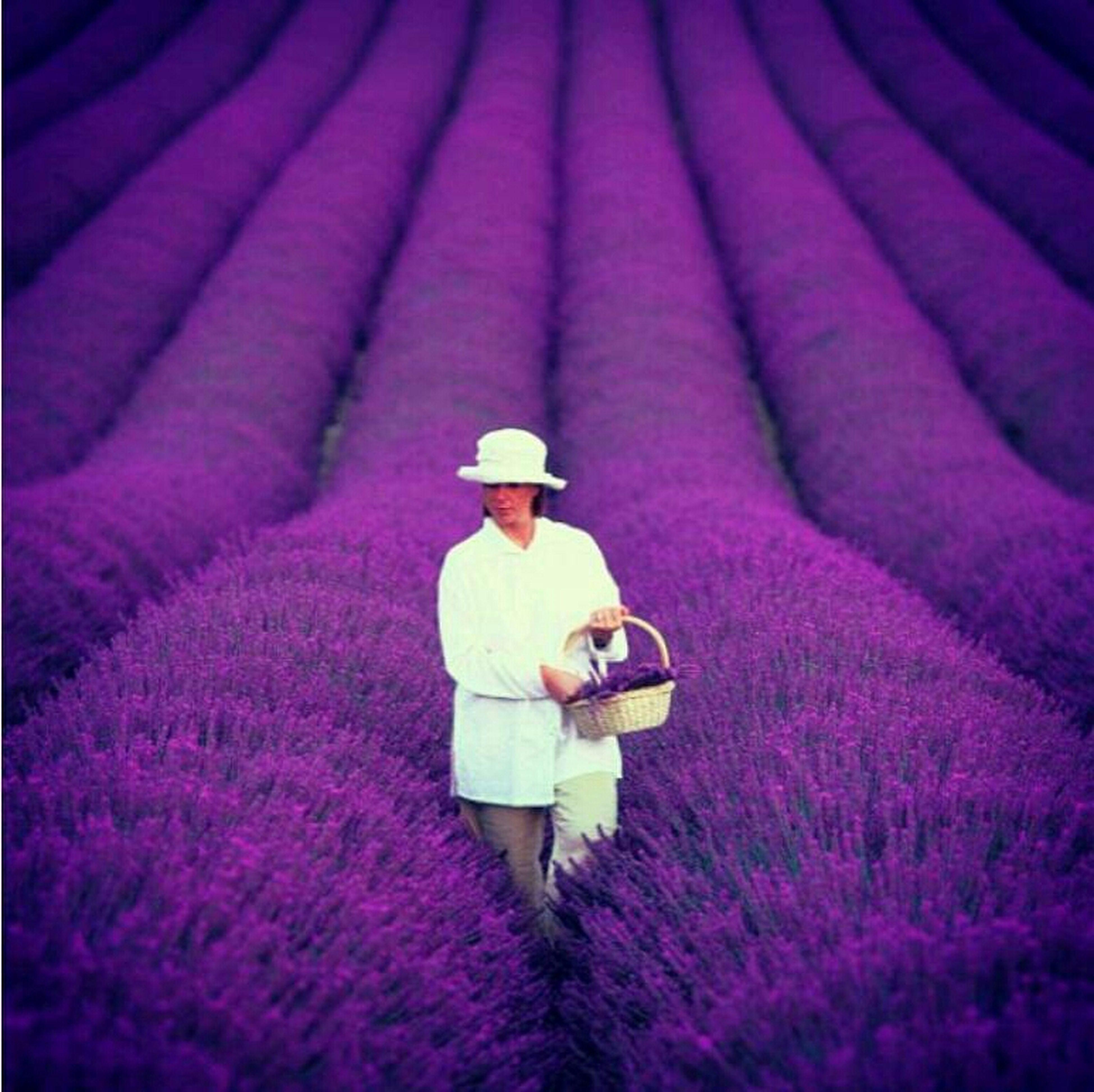 Nice Provence