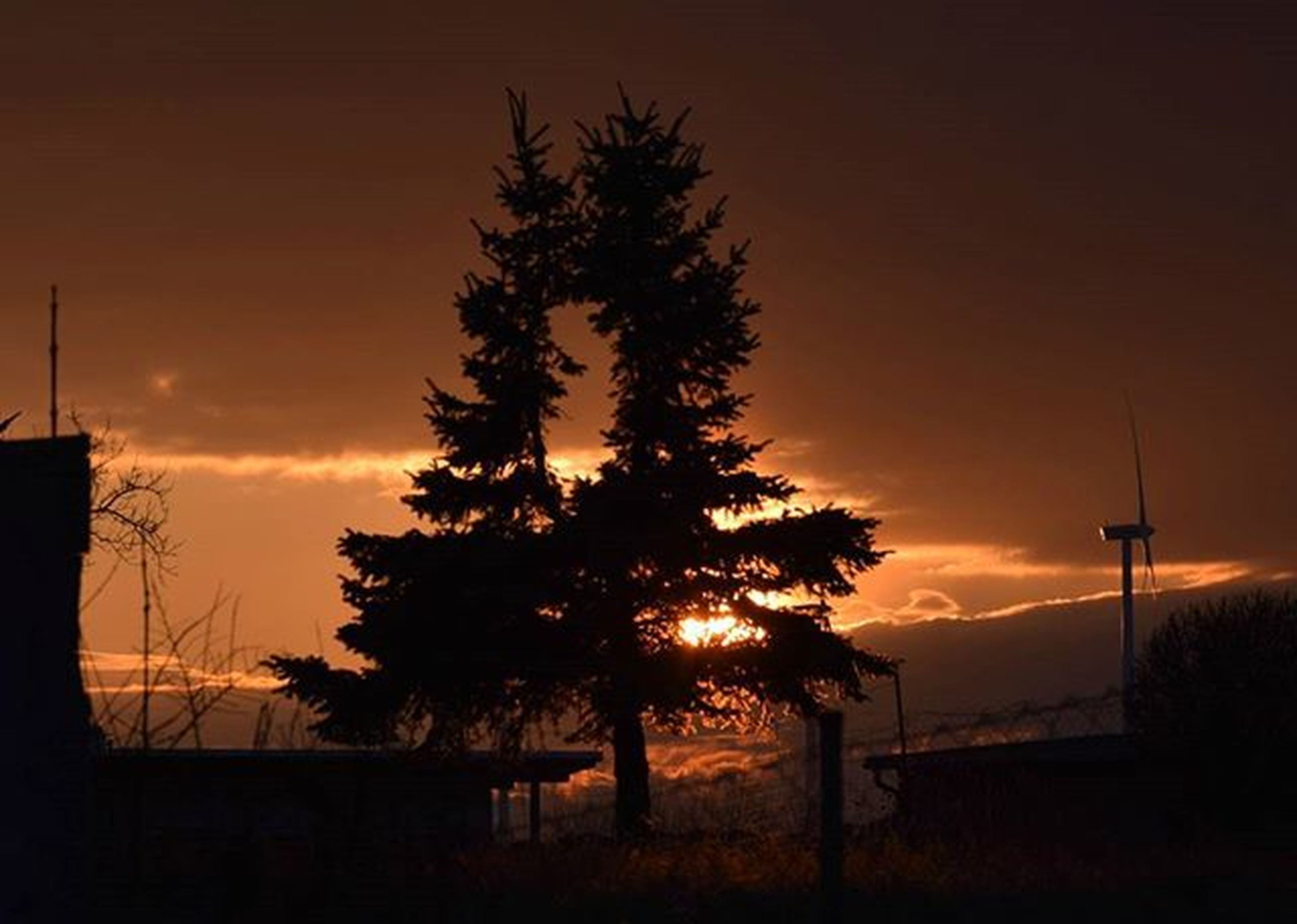 sunset, silhouette, orange color, tree, sky, tranquility, beauty in nature, scenics, street light, tranquil scene, nature, idyllic, sun, low angle view, dark, outdoors, no people, lighting equipment, growth, landscape