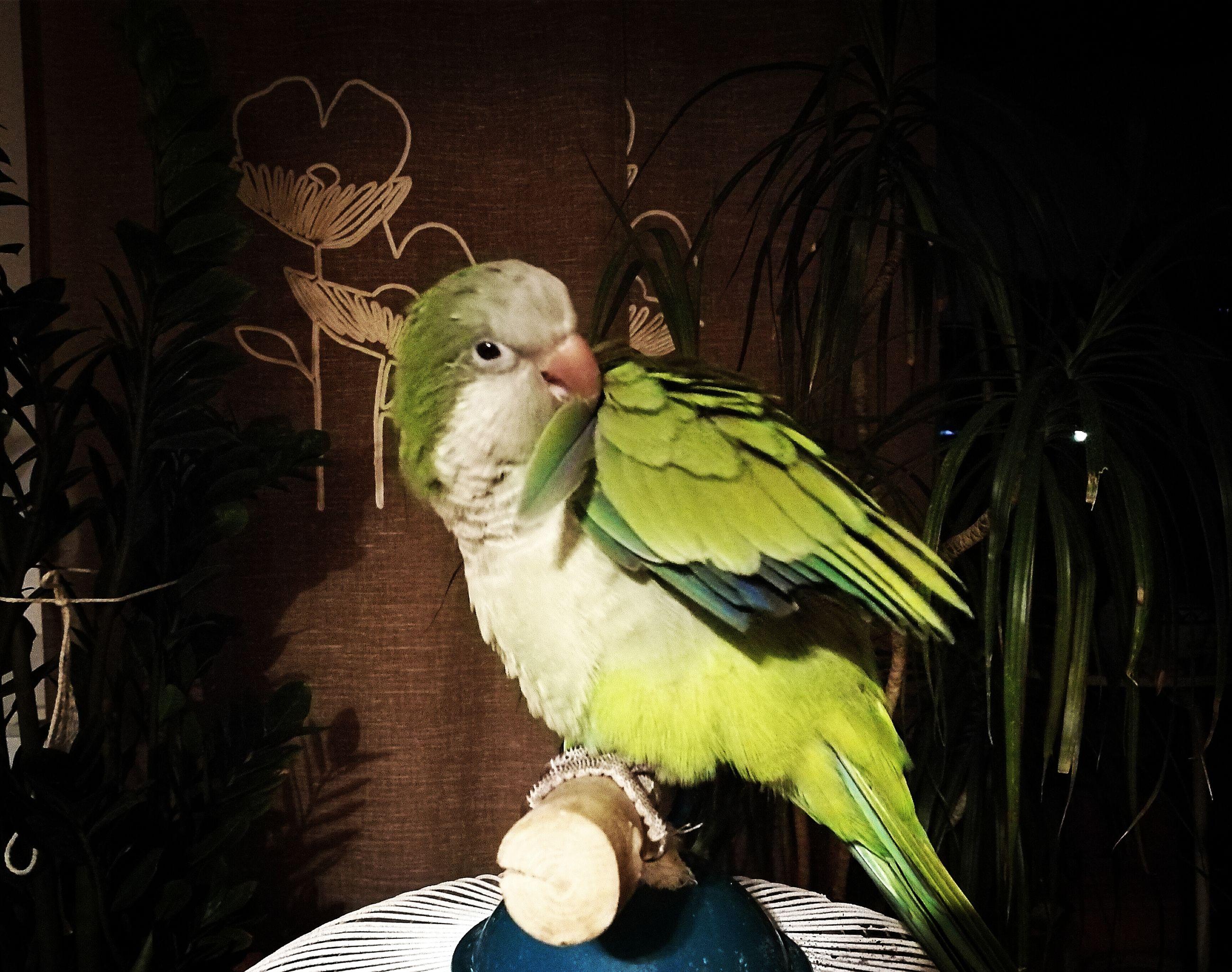 animal themes, bird, one animal, perching, zoology, green color, nature, no people, beak, domestic animals, animal