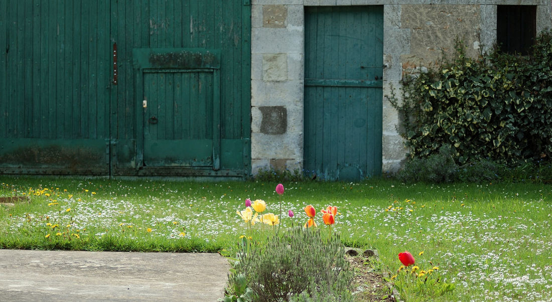 Beauty In Nature Bournemouth Campagne Ferme Fleurs Flower Grange Grass Green Green Color Multi Colored Nature No People Outdoors Petal Plant Rural Tranquility Tulipe Vert Yonne Yonnetourisme