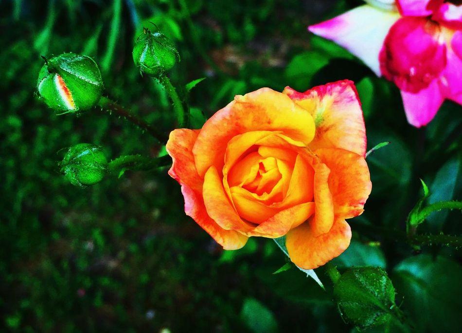 Spring blooms Streamzoofamily Gigcity Chattanooga EyeEmTennessee IPhoneography EyeEm Nature Lover Spring Flowers Flower RuralTreasures