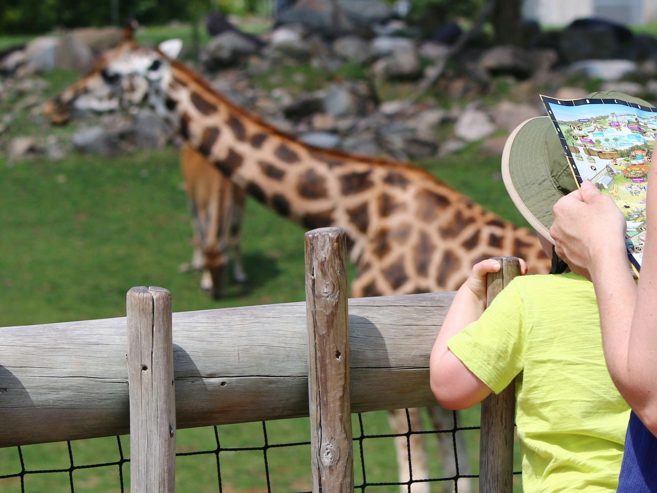 Animal Themes Animal Wildlife Animals In The Wild Child Education Focus On Foreground Giraffe Human Hand Learning One Animal Outdoors People Safari Teaching Travel Vacation Zoo