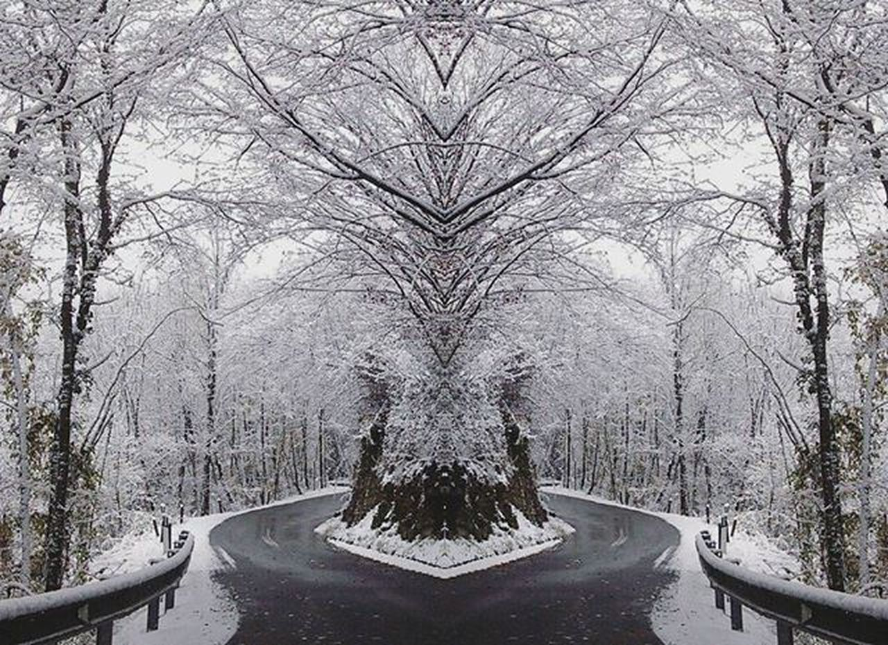 N E W Y E A R Snow Awesome Winterwanderland Naturelovers Natureza Winter Snowyday Winterscene Snowday White Mountain Landscapenature VSCO TBT  Vscocam Beauty_imgs Gorgeous Bestview Landscapelover TBT  Vsconature VSCO Bestoftheday Exploring Outdoors forest trees magic vallebrembana