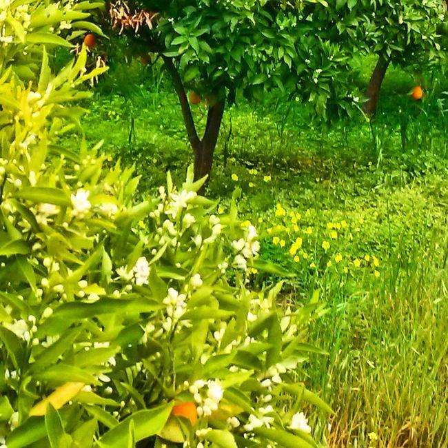 Relaxing Taking Photos Check This Out Flowers Springtime Green Green Green!  Enjoying Life Kotronas Mani Greece