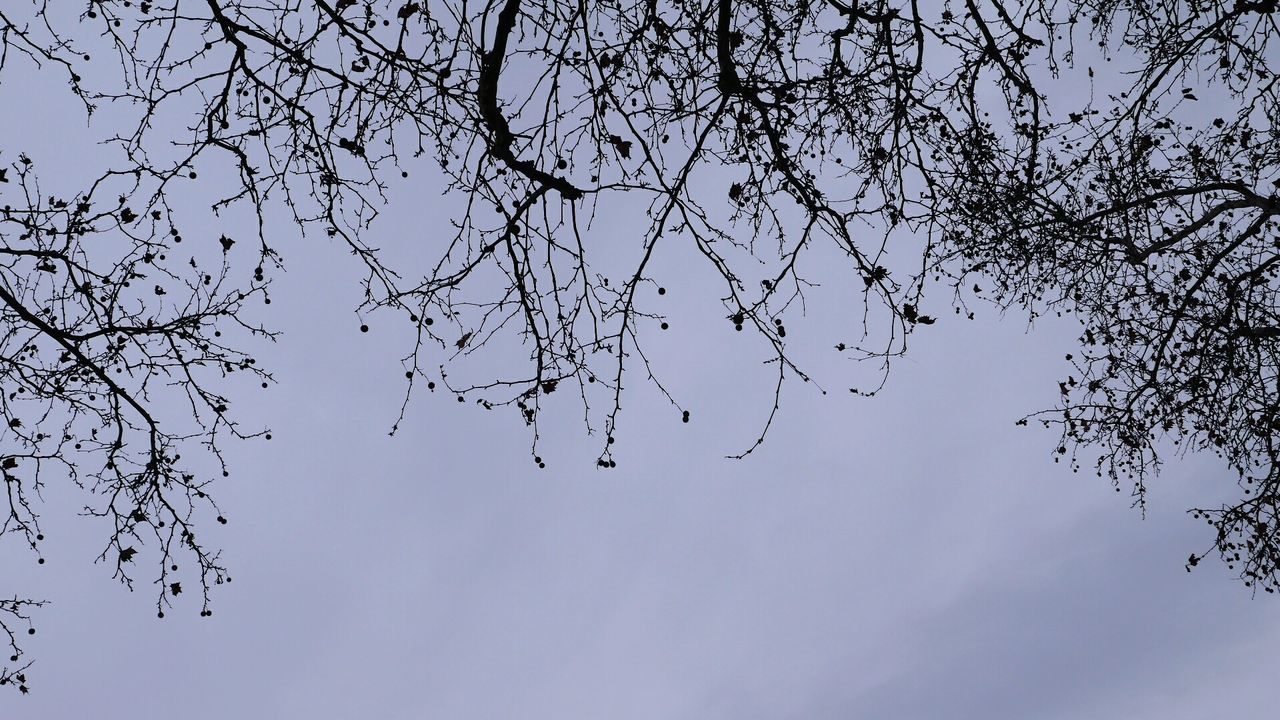 Nature No People Outdoors Sky Beauty In Nature Tree Day Silhuette Trees And Bushes Branches And Sky Природа ветки небо голубоенебо силуэт The Great Outdoors - 2017 EyeEm Awards