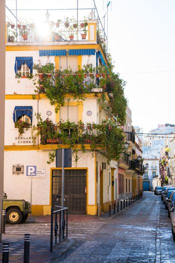 Streetphotography Architecture Colors Colorful Sunny Sevilla Seville