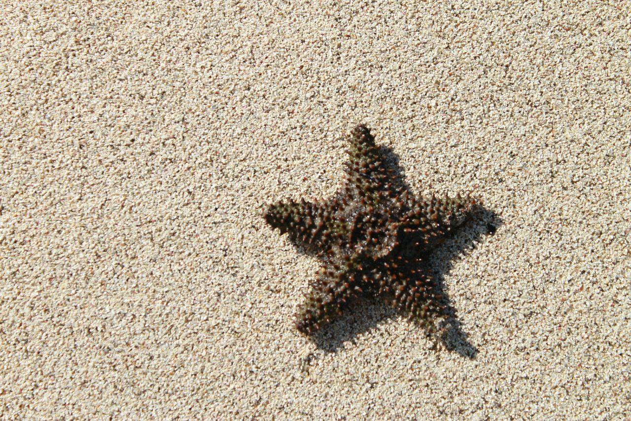 Beautiful stock photos of starfish, Animal Themes, Beach, Close-Up, Day