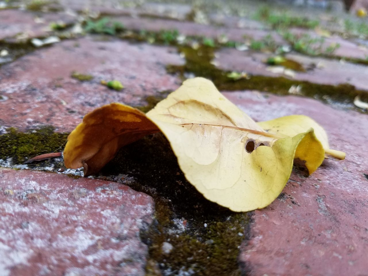 leaf, nature, day, change, outdoors, close-up, fragility, no people, animal themes, one animal, animals in the wild, autumn, beauty in nature, maple