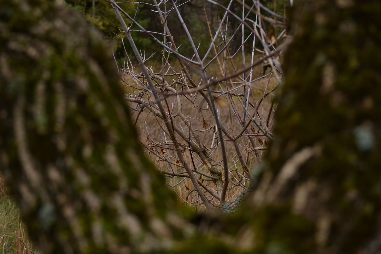 tree, branch, nature, no people, day, outdoors, twig, bare tree, forest, close-up, tree trunk, plant, beauty in nature