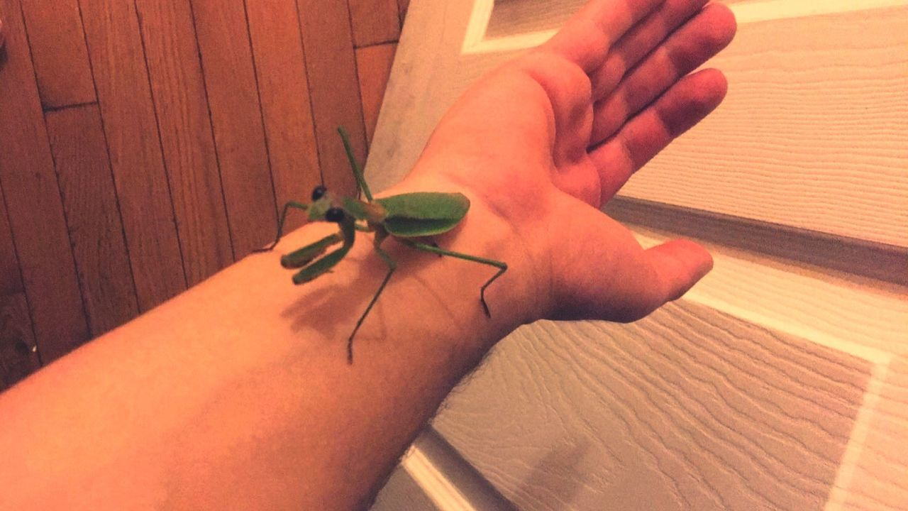 one animal, human hand, animal themes, animals in the wild, high angle view, human finger, insect, one person, human body part, animal wildlife, real people, indoors, close-up, day, people