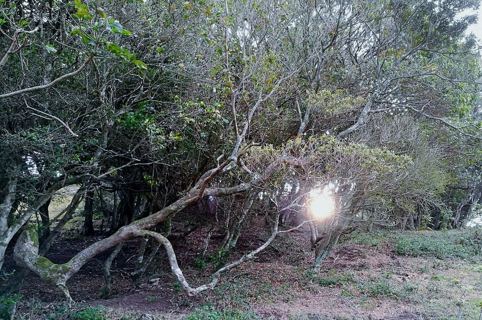 Tree No People Nature Beauty In Nature Outdoors Backgrounds Day Sunset Sunset✨trees✨ Sunlight Sun Forest Of Lost Souls Cold Temperature Forest Photography in Montañas De Escazú San Jose, Costa Rica