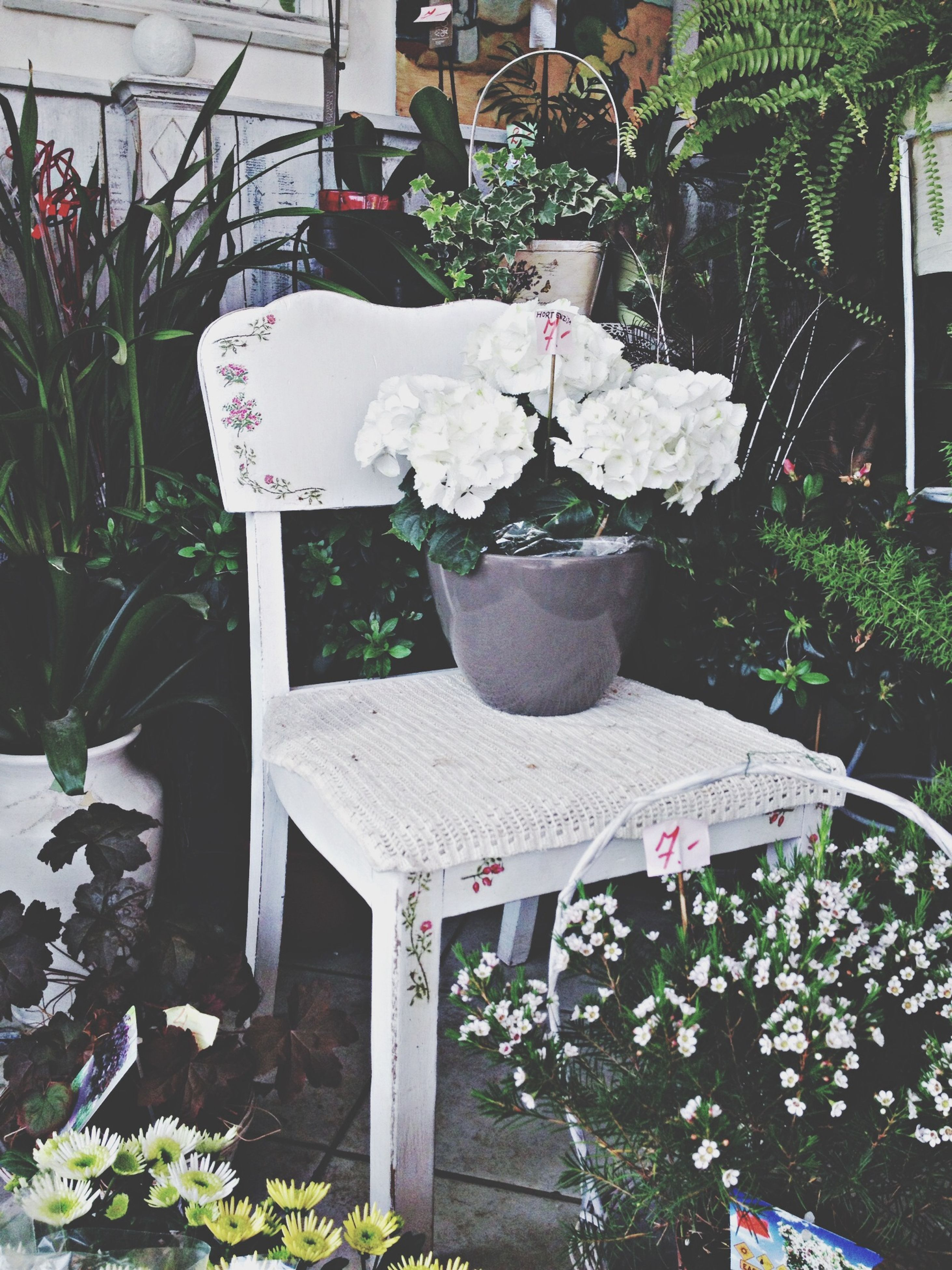 plant, potted plant, flower, growth, chair, house, front or back yard, leaf, flower pot, built structure, architecture, freshness, building exterior, table, nature, day, window, no people, outdoors, tree