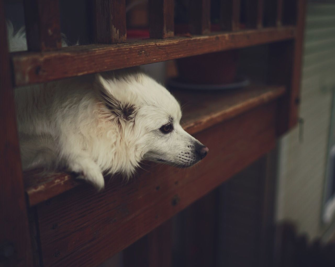 Dog Pets One Animal Indoors  Domestic Animals Mammal Animal Themes No People Close-up Day