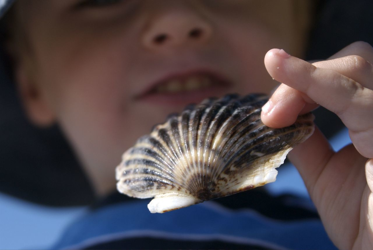 Low Angle Close-Up Of Boy Holding Seashell