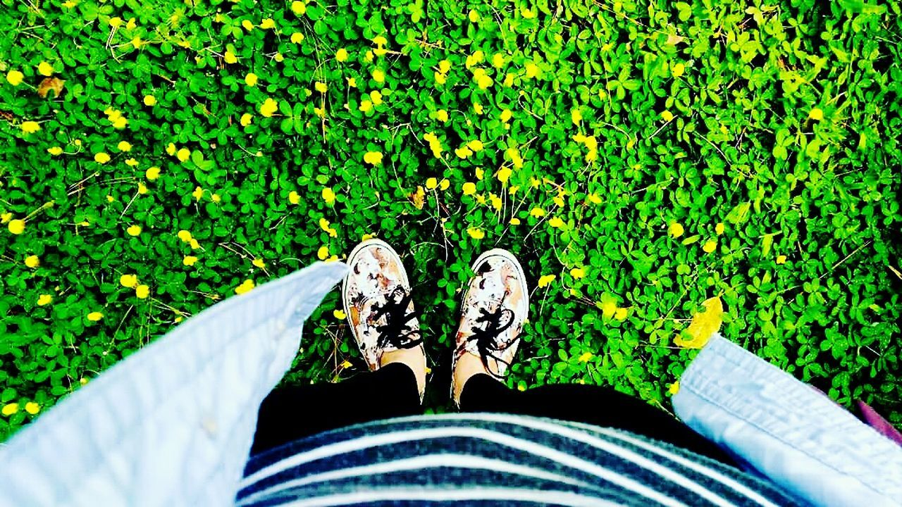 Little FLOWERS 🌻 below my little FEET 👣 People And Places Person Green Color Shoe Personal Perspective Standing Grass High Angle View Field Footwear Plant Maximum Closeness People And Places. Green Day Grassy People And PlaceOutdoors Freshness Wildflower Brightenyourday Brightenupyourday Sunnyday🌞 Sunshine💛 Positive Vibes