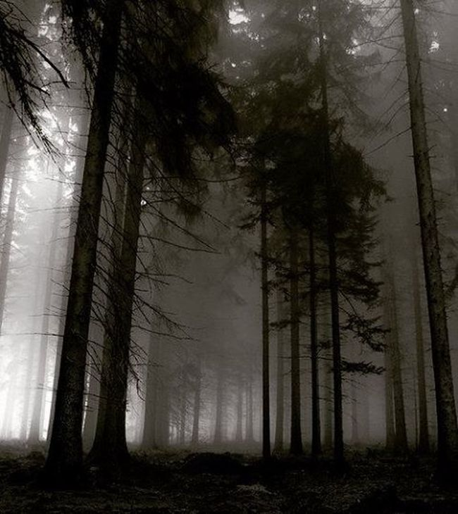 Alone deep in the woods at night .... Match_bw Bw_lover Dark_nature Best_bnw_archive Bnw_captures Nature Naturelovers Insta_bw Pocket_bnw Srs_bnw Rsa_bnw Like4like Likeforlike Ayad_bnw Moonlight Wood Darkness Darkwood Night Photoworld_star_bnw
