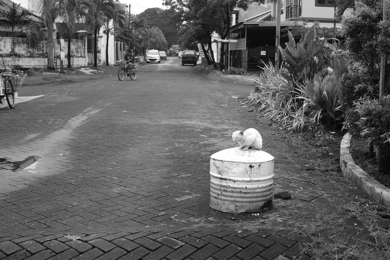Animal Themes Architecture B&w Street Photography Black And White Building Exterior Built Structure Cat Day Feline Footpath Fujifilm_xseries INDONESIA Indonesia_photography Java Kitty Cat Monochrome Nature No People Outdoors Stray Cat Street Photography Streetphotography Surabaya Tree