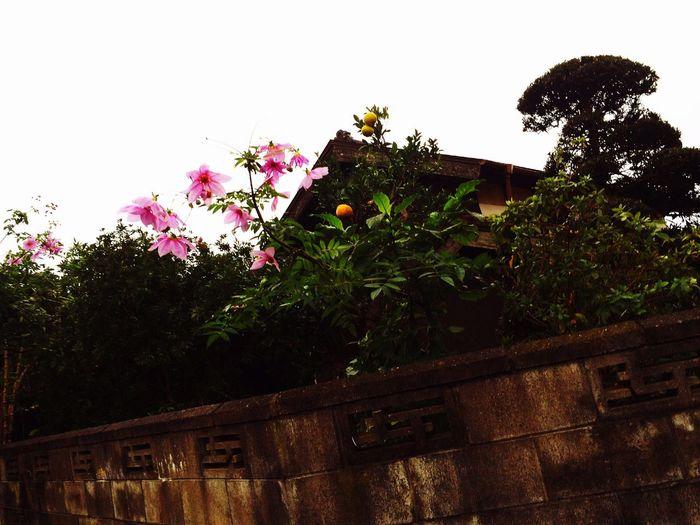 Rainy morning🌧 Rain Morning Rainy Day Japan Warking