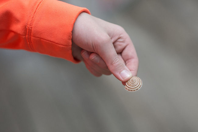 Shell Hand Depth Of Field Shells Depthoffield Bokeh Spiral Small Things Check This Out Taking Photos