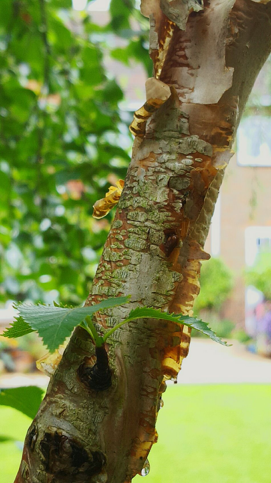 Paper Birch Garden Photography New Shoots🌱 My World