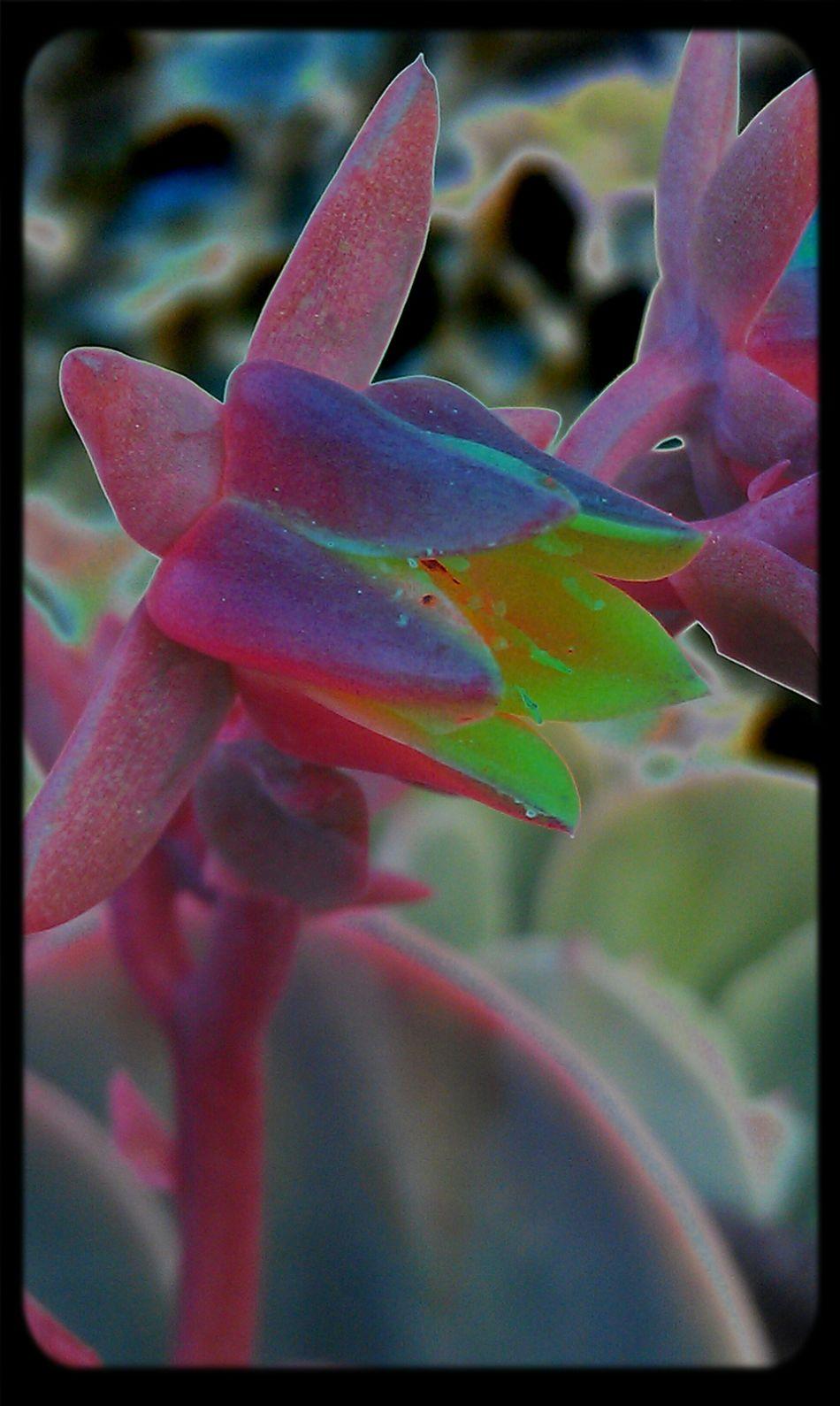 Flowers Isn't It Lovely?