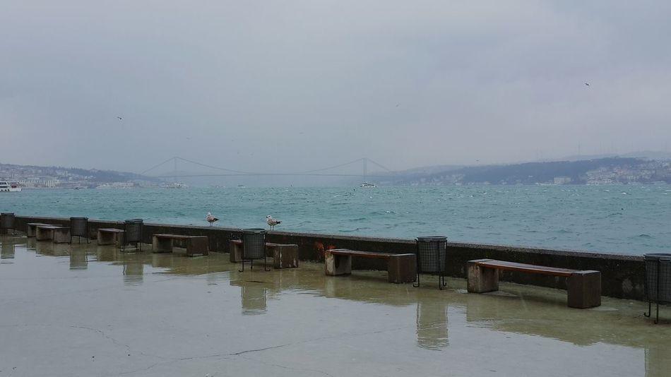 Rainy ☔💧Mimarsinanuniversity MSGSU Sea Seagulls Msgsurihtim Istanbul Turkey Vscocam Photooftheday