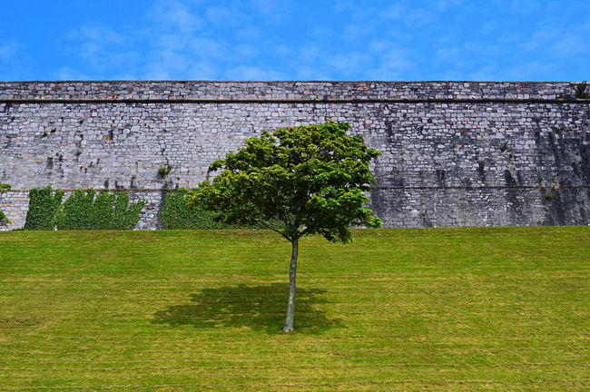 A blue sky, a big wall. a small tree and some short grass !😄 Beauty In Nature Big Wall Blue Sky Eye4photography  EyeEm Best Shots EyeEm Gallery EyeEm Nature Lover Fragility From My Point Of View Grassy In The Middle Of Nowhere Life's Simple Pleasures... Living The Dream Looking Up Low Angle View Malephotographerofthemonth Minimalism Relaxing Scenics Shadow Short Grass Sky Small Tree Solitary Tree