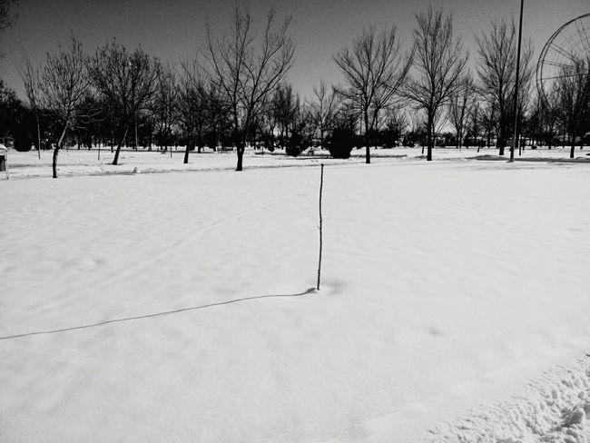 The Street Photographer - 2016 EyeEm Awards Snow Tree B&w Naked Tree Tree In Snow Winter