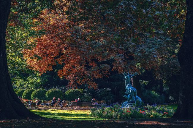 Garden Tranquil Scene Tranquility Scenics Nature Beauty In Nature Outdoors Green Color Fall Formal Garden Tourism Multi Colored Park - Man Made Space Paris Jardin Du Luxembourg