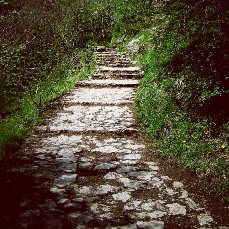 Path Photographer Photopftheday Way Nature Walk Sunny Awesome Love Style Instadaily England Polishgirl Anglia Sciezka Droga Spacer Słonecznie Dobrydzien