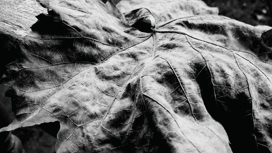 Eyemphotography Leafs 🍃 Taking Photos Nature On Your Doorstep Mountain Range Green Color Selective Focus Botany Change Eyeemblack&white Eyeemblack2 EyeEmBlackAndWhite Outdoors Relaxing EyeEm Nature Lover First Eyeem Photo Nature's Diversities - 2016 EyeEm Awards Scenics Garden Freshness Growth Intricacy Softness Vacations Focus On Foreground