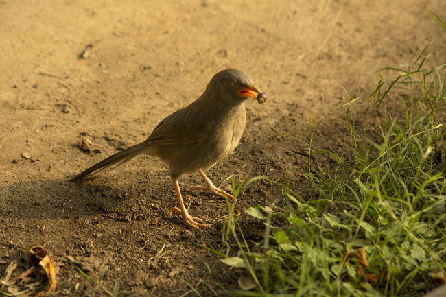 Bird Wildlife Park Bird Eating