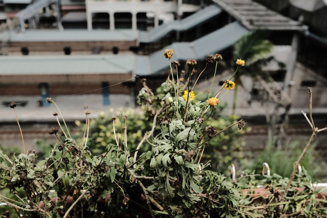 plant, growth, nature, no people, selective focus, outdoors, day, flower, beauty in nature, close-up, fragility, freshness