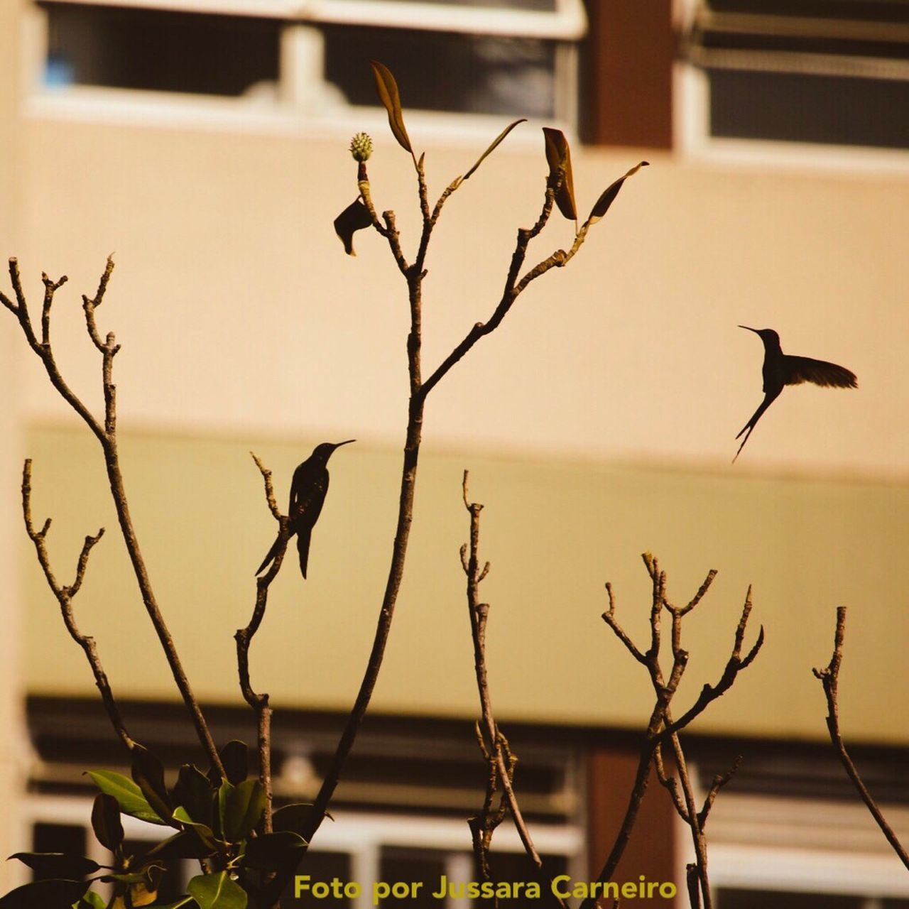 Beija-flor Humingbirds Bird Animal Themes Day Canon 70d 55-250mm Urbanphotography