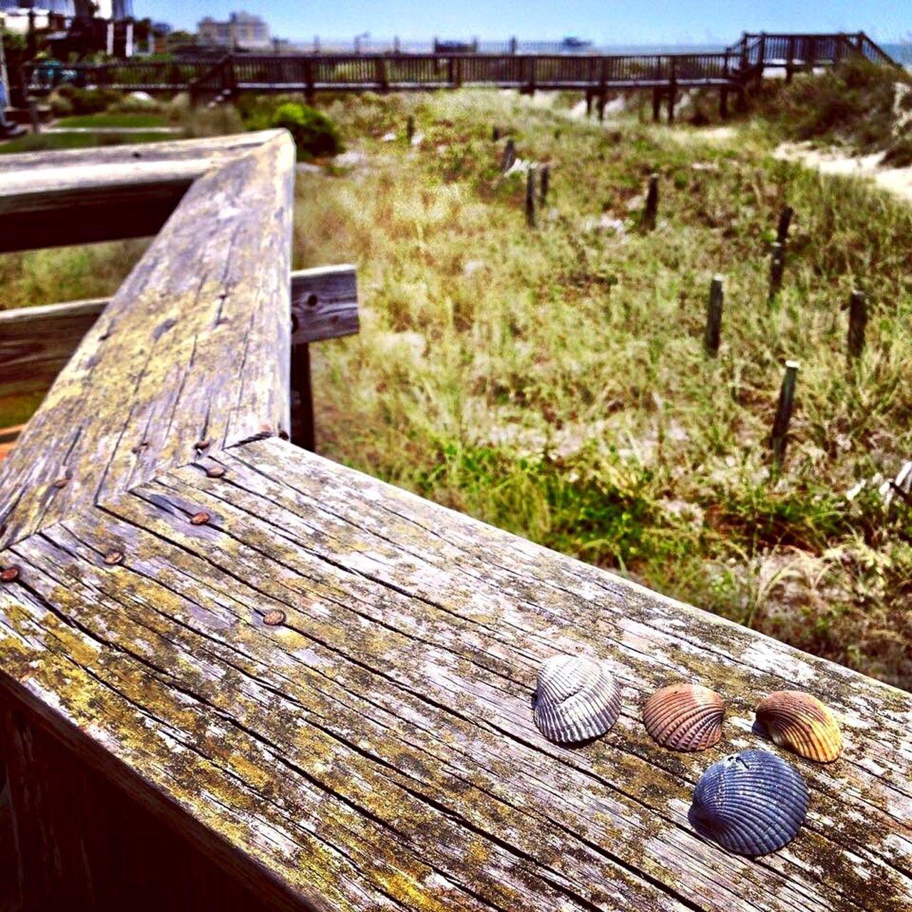 Beach Seashells Wooden Feel The Journey Seaside